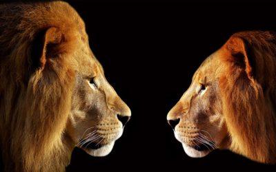 «El miedo del león» ?